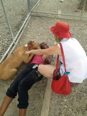 Visiting an animal shelter.